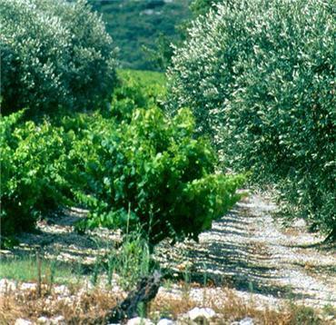 Uzes et sa region for Au petit jardin uzes